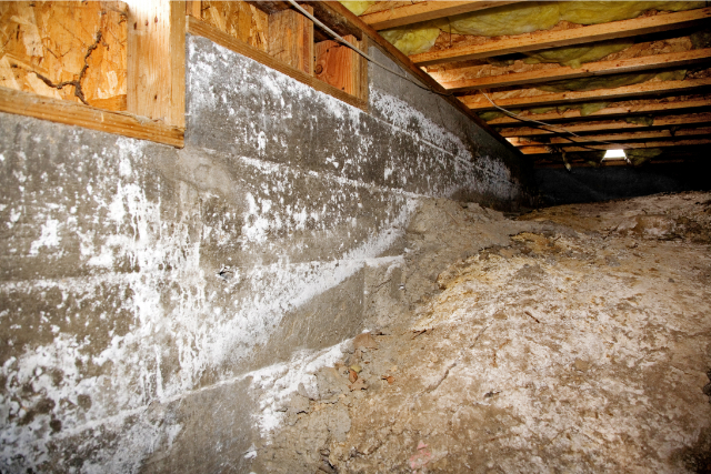 Growing mold in a residential crawl space